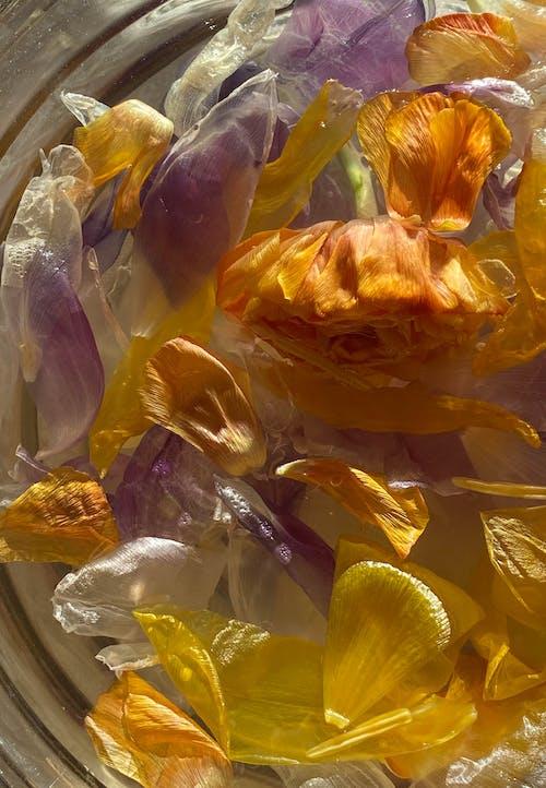 Gratis lagerfoto af aroma, Aromaterapi, aromatisk