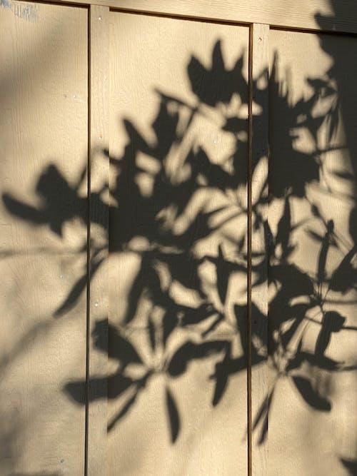 Darmowe zdjęcie z galerii z architektura, botaniczny, botanika