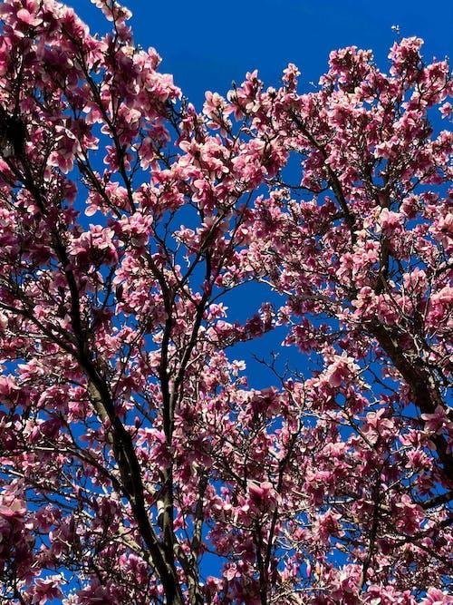 Gratis lagerfoto af aroma, aromatisk, blå himmel