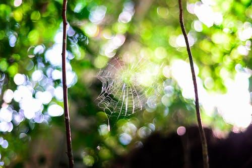Foto stok gratis cabang, hutan, jaring laba-laba, pohon