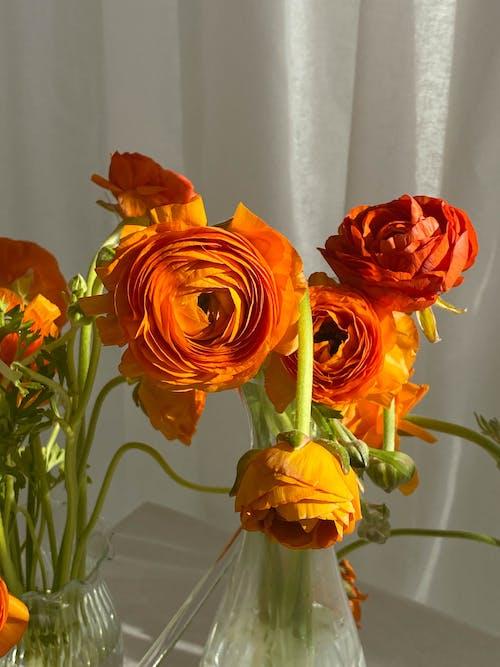 Gratis lagerfoto af aroma, arrangement, blomst