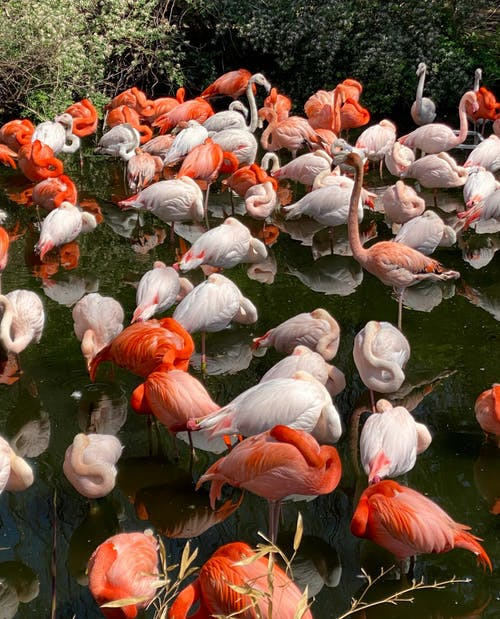 公園, 冷靜, 動物 的 免費圖庫相片