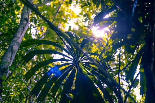 Foto stok gratis hutan, matahari, matahari menyala, poros cahaya