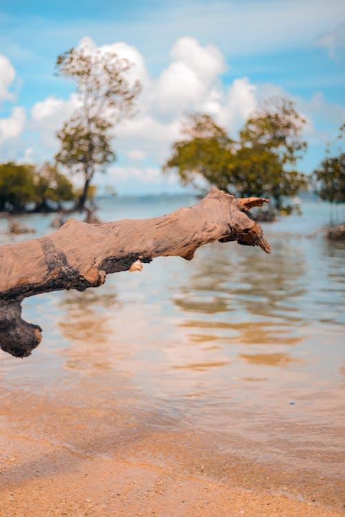 Foto profissional grátis de árvore, filial, litoral, mar