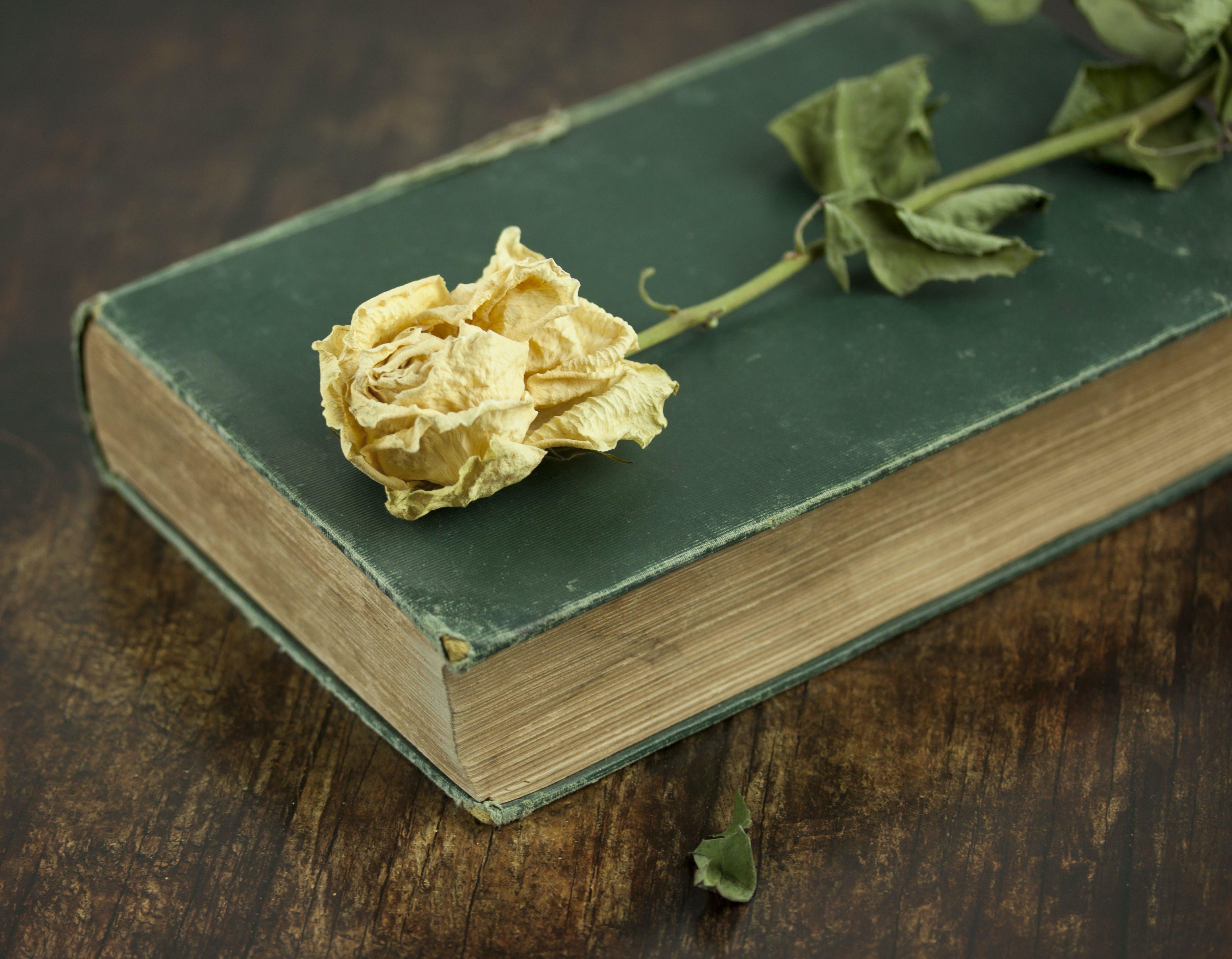 Základová fotografie zdarma na téma stará kniha, suché květiny, zátiší, zelená