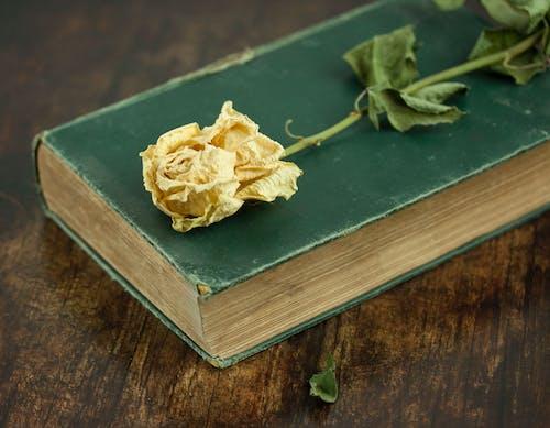 Ilmainen kuvapankkikuva tunnisteilla asetelma, keltainen, kuiva kukka, vanha kirja