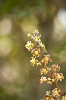 Shallow Focus Photography of Yellow and Pink Flowers