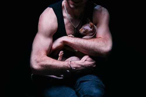 Foto d'estoc gratuïta de amant del gat, animal, bíceps