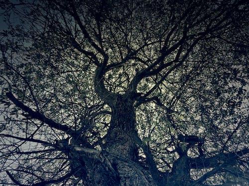 Ilmainen kuvapankkikuva tunnisteilla kuva alakulmasta, luonto, mustavalkoinen, oksat
