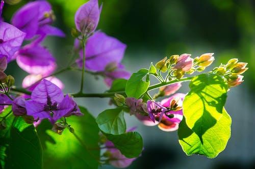 Fotos de stock gratuitas de bonito, botánico, brillante, brotes