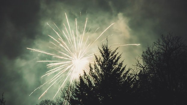 Fireworks Display Above Trees