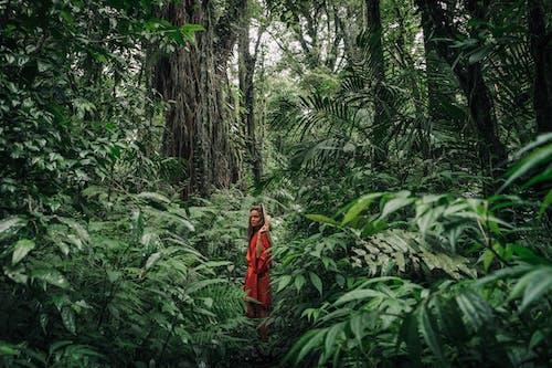 Foto profissional grátis de ao ar livre, árvore, aumento