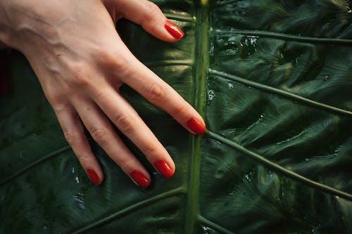 Immagine gratuita di avvicinamento, dita, foglia verde