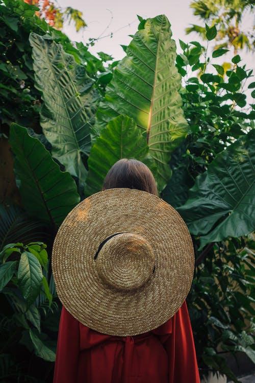Fotos de stock gratuitas de al aire libre, bali, bosque