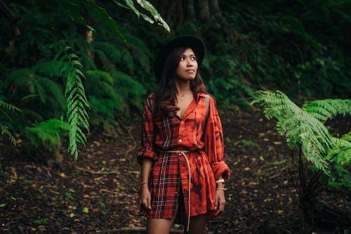 Imagine de stoc gratuită din arbori, Bali, codru