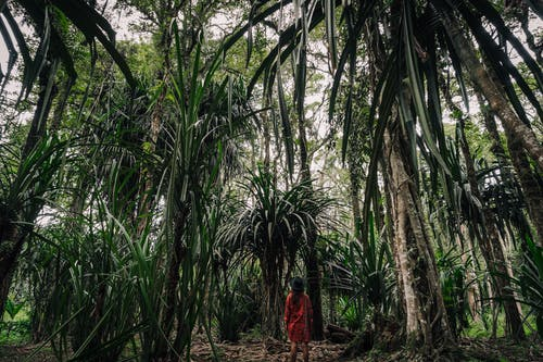 Back View of Woman Standing in the Middle of the Rainforest
