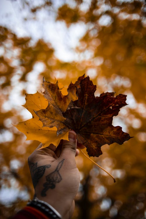 Person's Hand Holding Brown and Yellow Autumn Leaves
