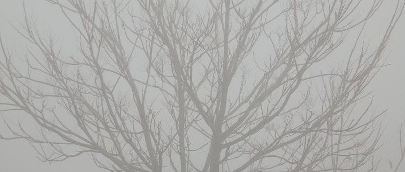 Free stock photo of fog, tree, branch, twig