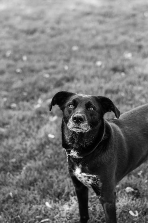 Black and White Short Coated Dog on Grass Field