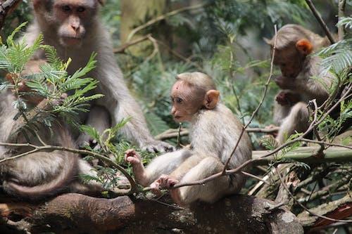 Бесплатное стоковое фото с ребенок обезьяны, сидящая обезьяна