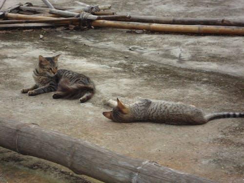 Бесплатное стоковое фото с кошки