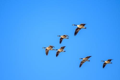 Gratis arkivbilde med and, blå himmel, dyr