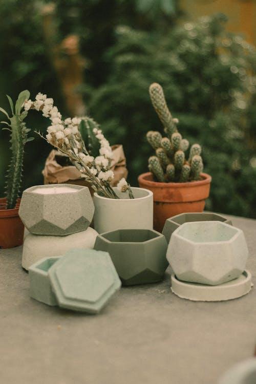 Green Cactus Plants on White Ceramic Pot