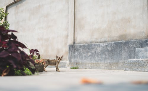 Brown Cat Sitting on Gray Concrete Floor
