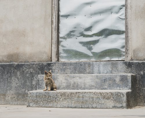 Brown Tabby Cat Sitting on Concrete Wall