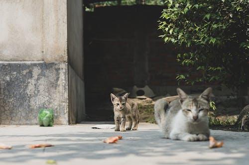 Three Cats on Gray Concrete Floor