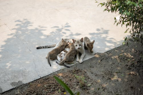 Brown Tabby Cat and White and Brown Cat on Gray Concrete Floor