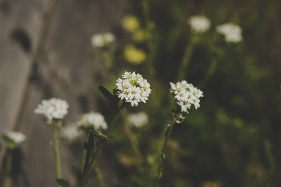 Close-up Photo of White Petaled Flowers at Daytime