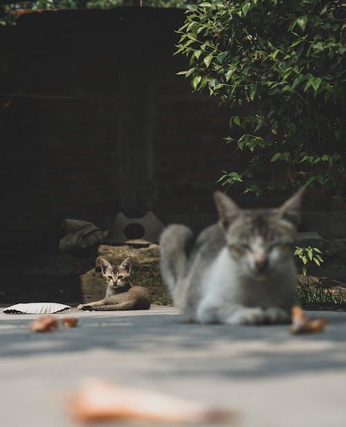 Free stock photo of animal, baby, cat