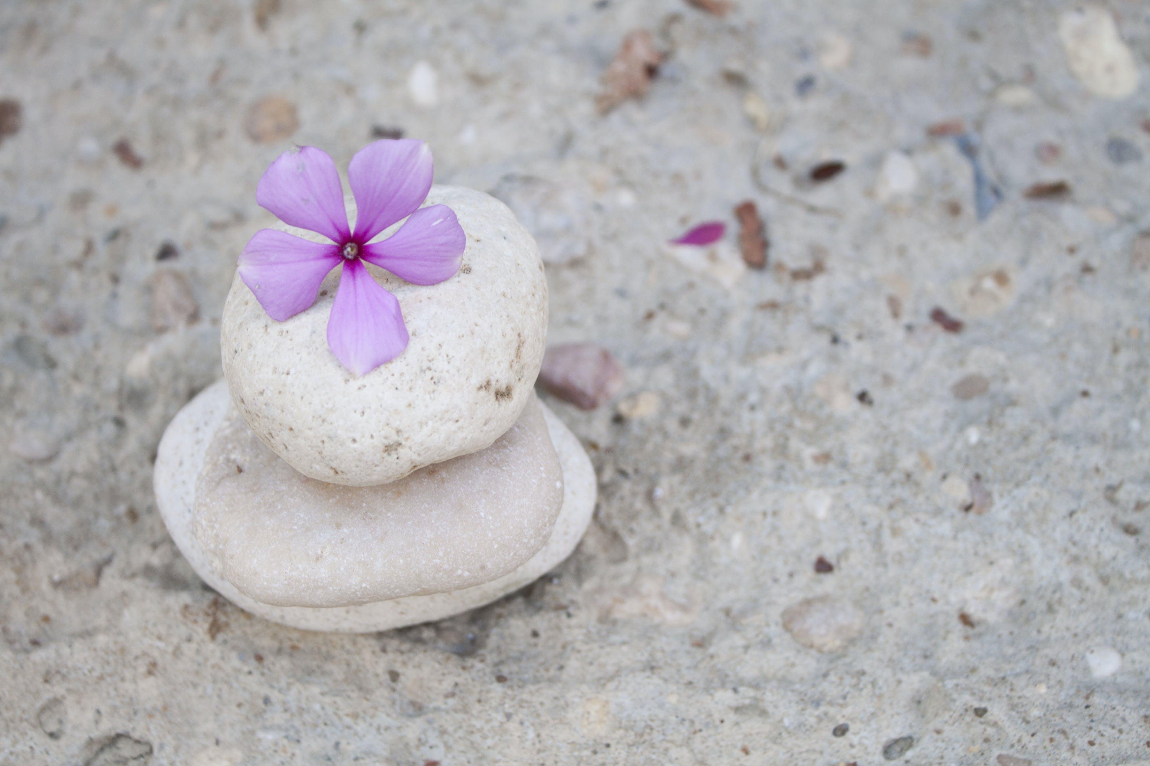 Základová fotografie zdarma na téma bílá, fotky, kameny, květiny