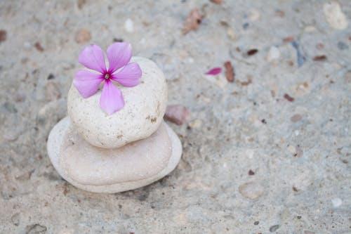 Ilmainen kuvapankkikuva tunnisteilla asetelma, kivet, kolme, kukat