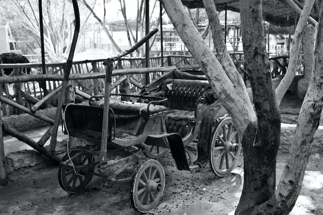 Fotos de stock gratuitas de árbol, blanco y negro, carro