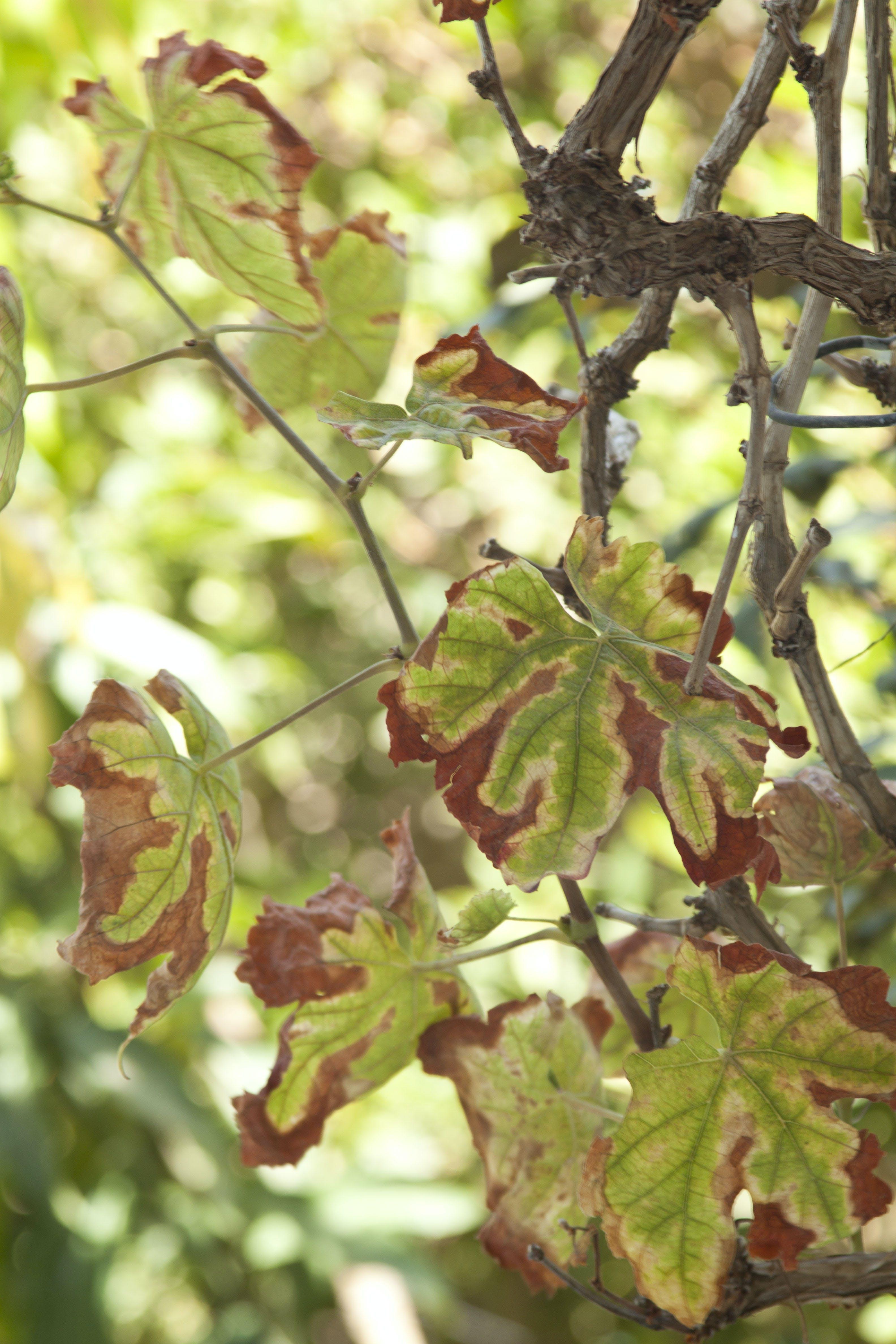 Základová fotografie zdarma na téma příčky, suché listí, suchý list, zelená