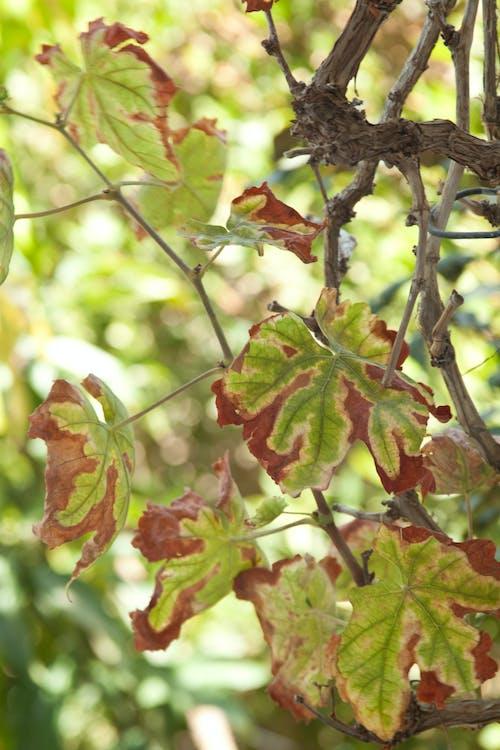 Δωρεάν στοκ φωτογραφιών με ξερό φύλλο, ξηρά φύλλα, πράσινος, σιδερακια δοντιων