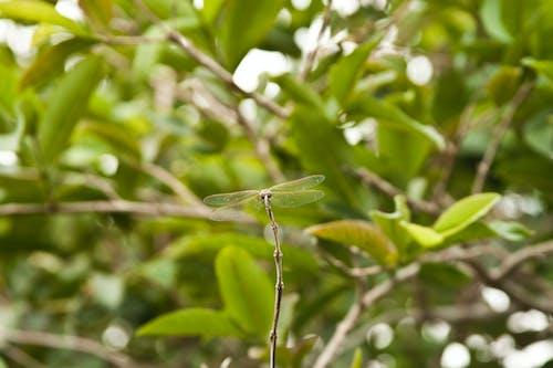Ilmainen kuvapankkikuva tunnisteilla hyönteiset, makrokuvaus, oksat, sudenkorento