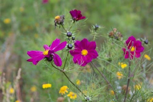 Δωρεάν στοκ φωτογραφιών με λουλούδια, μακροεντολές, μοβ, νεκρή φύση