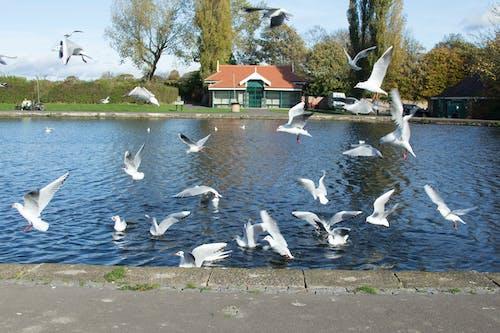 Δωρεάν στοκ φωτογραφιών με birs, ζώα, μπλε, ουρανός