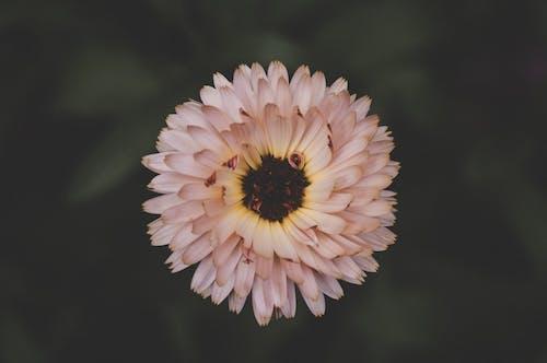 Gratis lagerfoto af blomst, blomstrende, farver, flora