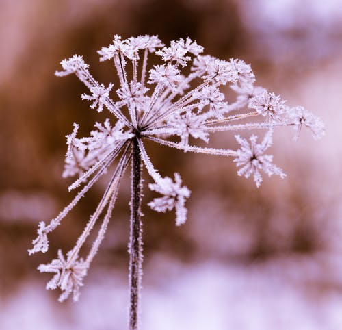 Free stock photo of cold