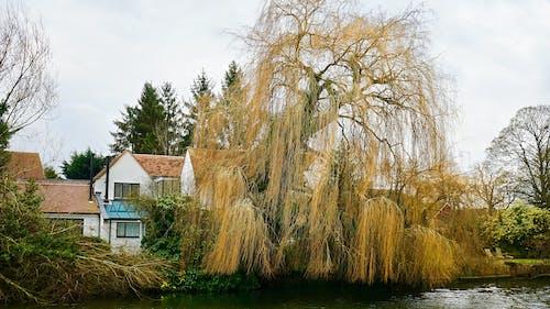茶色の木と白とピンクの家の近くの水域