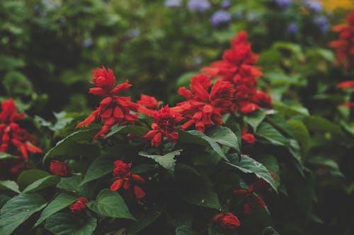 Photos gratuites de botanique, brouiller, centrales, concentrer