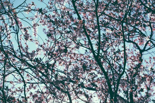 Безкоштовне стокове фото на тему «блакитне небо, відділення, галузь»