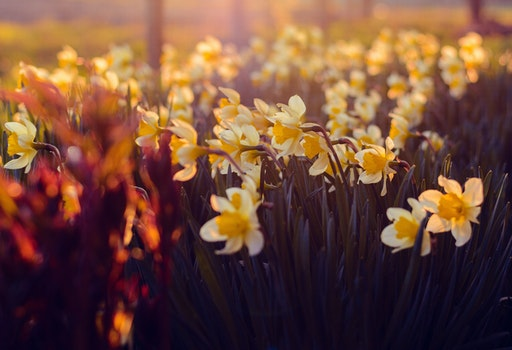 White and Yellow Petaled Flowers during Sunrise
