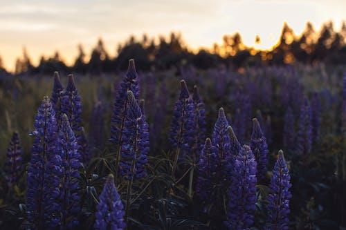 Imagine de stoc gratuită din apus, arbori, câmp, creștere