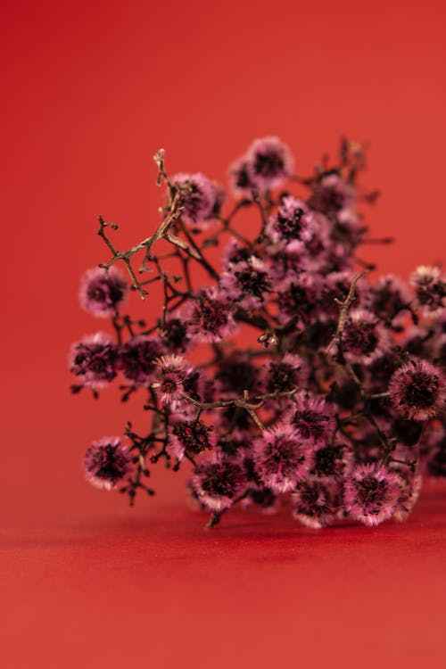 Bunch of dried pink flowers