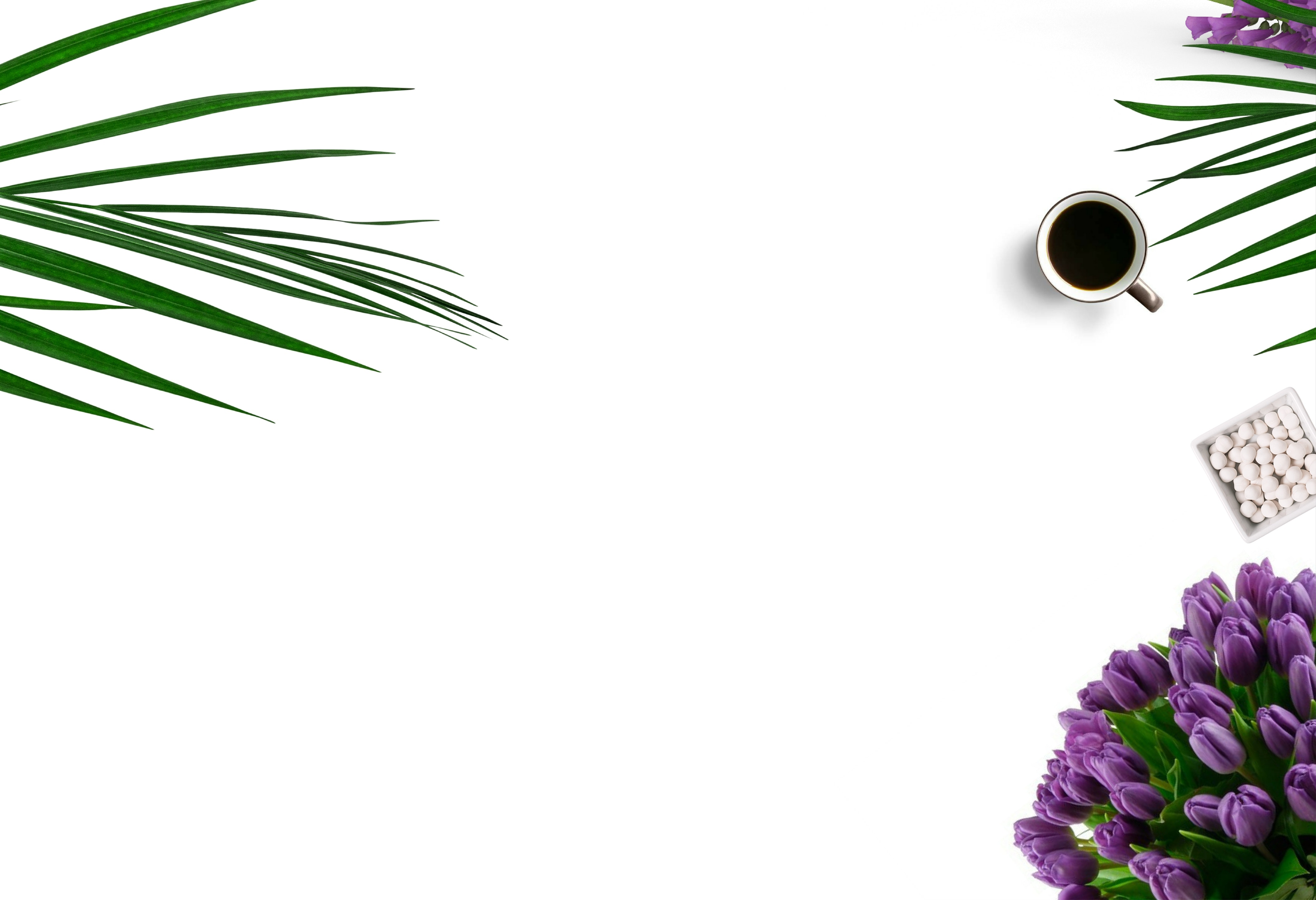 1000 Beautiful White Background Photos Pexels Free Stock Photos